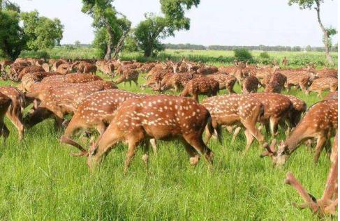 东丰药业专业养殖,为您提供优质、健康、安全的梅花鹿产品